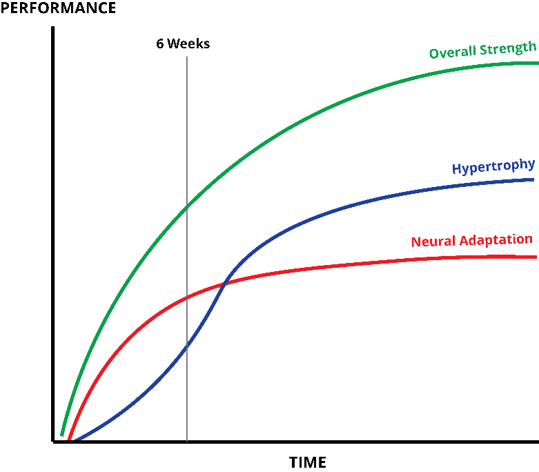 Image credit http://www.100pushups.com/wp-content/uploads/2015/10/strength-adaptations-resistance-training-graph.png